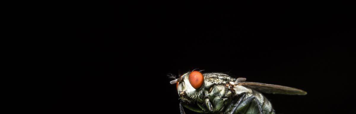 Where Do Flies Go at Night?
