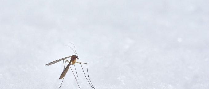 brown winged insect photograph