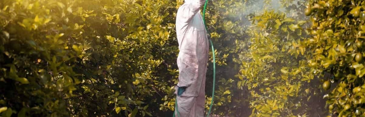 exterminator spraying pest control chemical