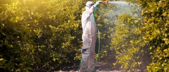 exterminator spraying pest control chemical