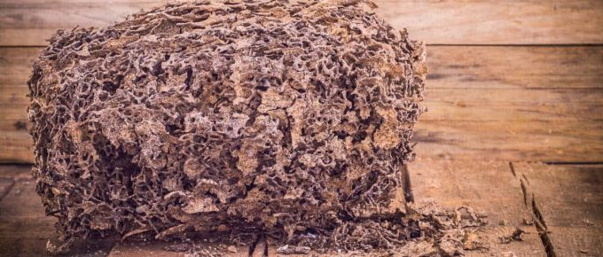 How Long Does It Take Termites to Destroy a House?