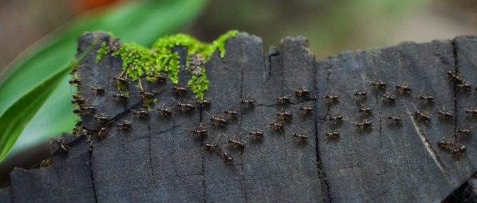 How Long Does It Take to Kill Termites Once Treated?