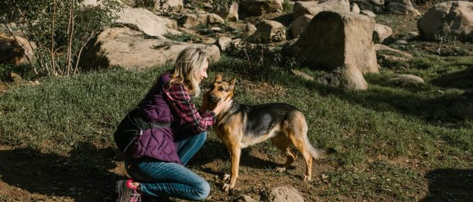 How to Stop Flies From Biting Dogs' Ears